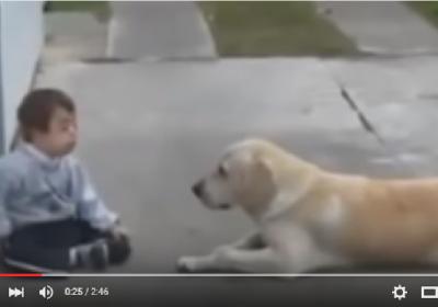 فيديو ابكى العالم… الكلب والطفل المعاق ذهنيا